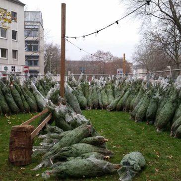 Tannenbaumverkauf der KjG St. Ludger